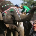15th Elephant Festival